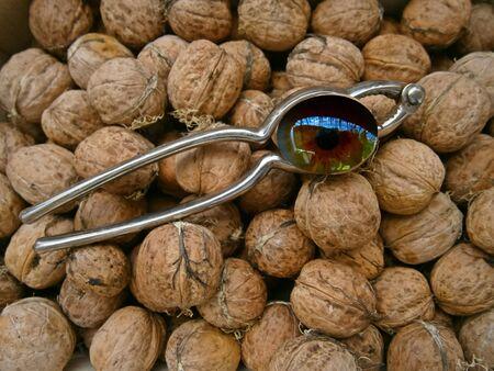 Eye in the nut caste
