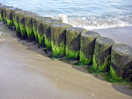 Algae on coastal protection photo