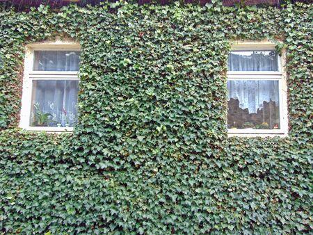 gibel: The house wall