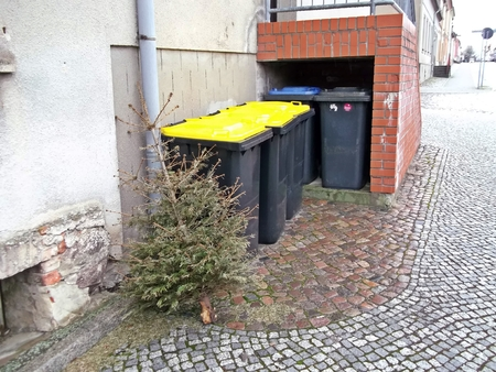 disposed: The Christmas tree