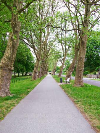 Sycamore avenue am Uckersee