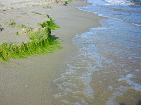 Green algae on the beach in Trassenheide