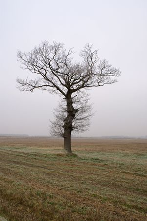 plough land: Lonely tree on plough land