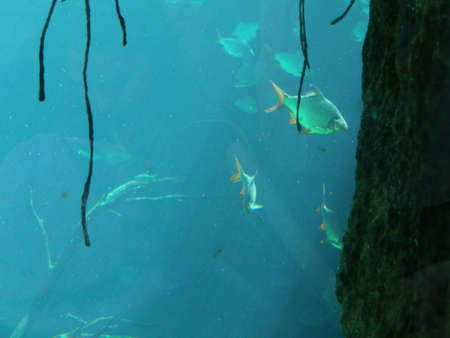plantlife: Underwater scene with fish and plantlife