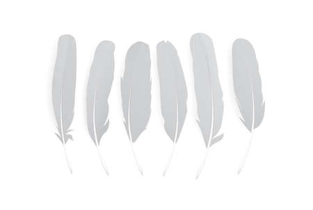 Realistic feathers isolated on white background. Birds plumage in abstract style. Isolated vector