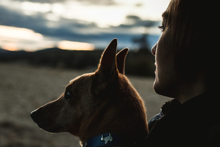 Silhouette of a dog and a girl in the country. Love between girl and dog