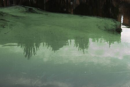 Green slurry in a polluted pond. Toxic waste thrown into the water