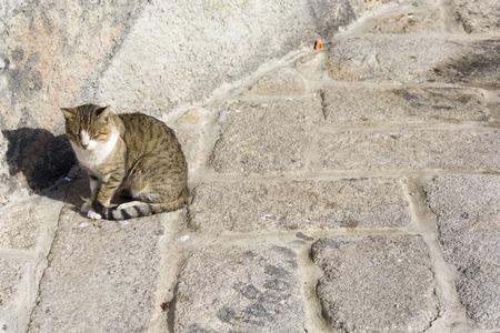 feline: cat pussy pussycat feline