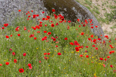 plant seed: plant flower red seed nature flora Stock Photo