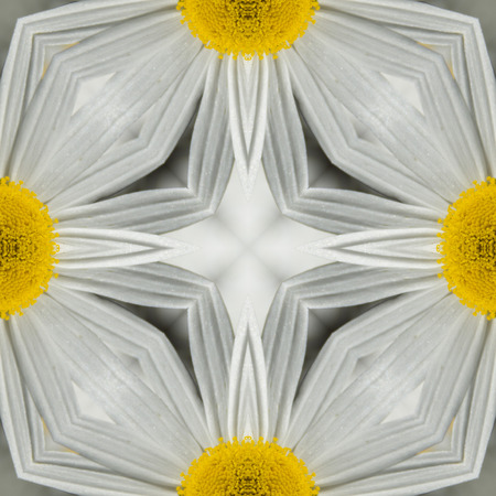 symmetry: kaleidoscope square texture pattern symmetry background abstract wallpaper abstraction textured repetitive geometric white yellow daisy Stock Photo