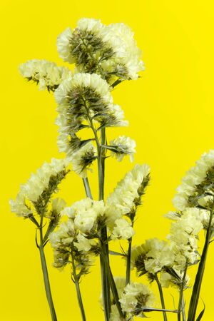 flora: plant, flower, bloom, blossom, flora, dry flowers, yellow background Stock Photo
