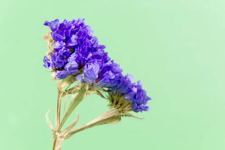 flora: plant, flower, bloom, blossom, flora, dry flowers, purple, green background