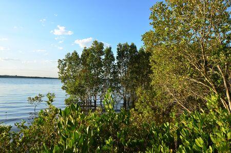 gold coast: Landscape of Coombabah Lakelands in Gold Coast Queensland Australia. Stock Photo