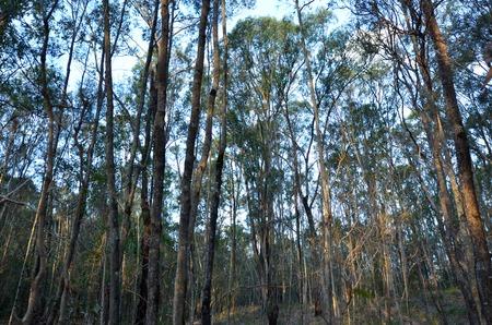 gold coast: Landscape of  forest in Coombabah Lakelands in Gold Coast Queensland, Australia.