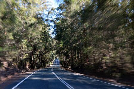 queensland: Driving through Springbrook National Queensland Australia