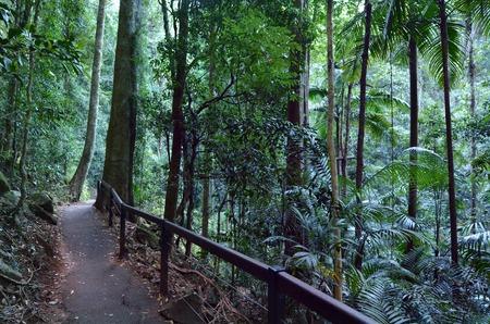 natural bridge: The Natural Bridge at Springbrook National Park in Queensland Australia. Stock Photo