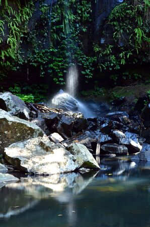 gold coast: Curtis Falls in Mount Tamborine rain forest in Gold Coast Queensland, Australia.