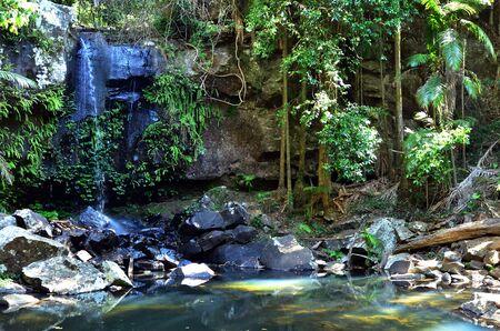 gold coast: Mount Tamborine Gold Coast Queensland Australia Curtis Falls in Mount Tamborine rain forest in Gold Coast Queensland Australia. Stock Photo