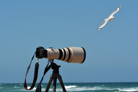 telephoto: Camera on a tripod during photoshoot of sea wildlife and nature on the beach.