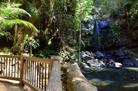 curtis: Curtis Falls in Mount Tamborine rain forest in Gold Coast Queensland, Australia.