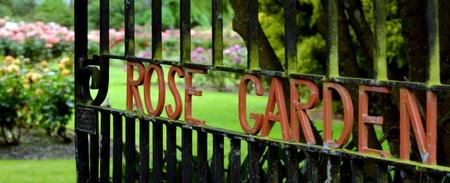north island: The Rose Garden of Palmerston North NZL The Rose Garden of Palmerston North North Island New Zealand.