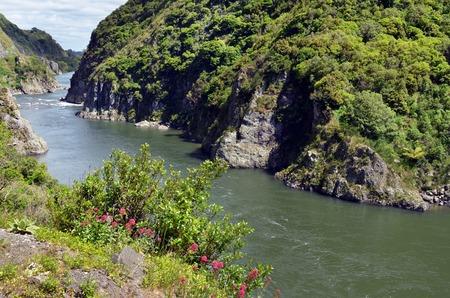 north island: Landscape of Manawatu River flows in Manawatu Gorge in the North Island of New Zealand.