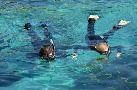 great barrier reef marine park: Shark Bay in Sea World Gold Coast Queensland Australia Visitors dive in Shark Bay touch pool at Sea World Gold Coast Australia. Stock Photo