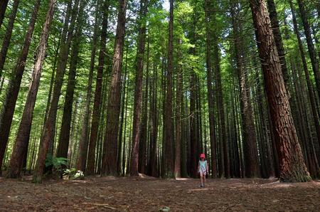 Niño viaja al aire libre en las secoyas de Rotorua, Nueva Zelanda.