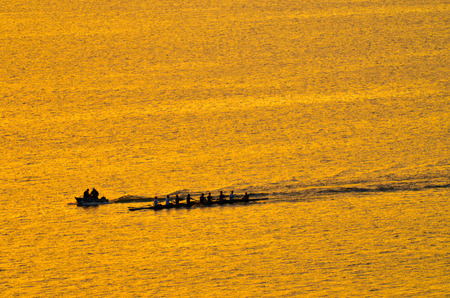 sculling: Silhouette of unrecognizable team of rowes on row boats sculling over lake Rotorua new zealand at dusk.