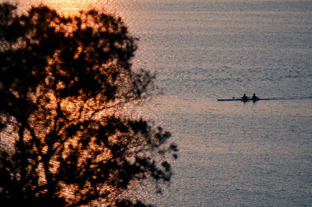 sculling: Silhouette of unrecognizable rowes on row boats sculling over lake Rotorua new zealand at dusk.