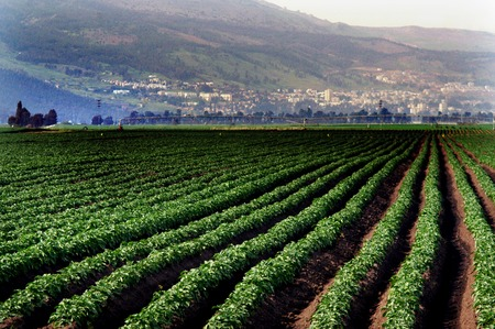 israel farming: Cultivated field in Hula Valley in north Israel. Stock Photo