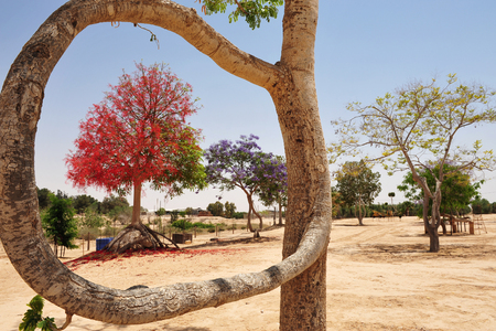 kibbutz: Shaped trees in Kibbutz Revivim,  Israel. Stock Photo