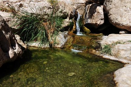 gedi: Ein Gedi spring in the Dead Sea area, Israel.