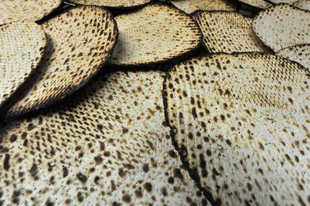 Hand made matsa Glatt Kosher pour la fête juive de la Pâque Banque d'images