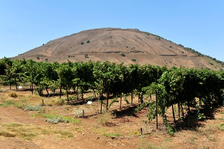 golan: Mount Bental in the Golan Heights, Israel.