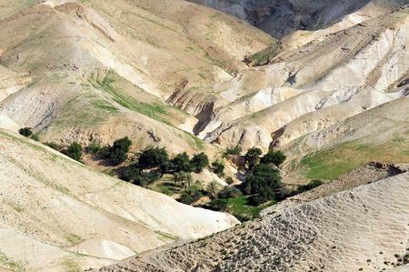 israel farming: Landscape view of oasis in the Judea Desert, Israel.