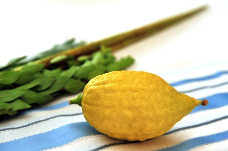 The Four Species - three types of branches and one type of fruit which are held together and waved in a special ceremony during the Jewish holiday of Sukkot. The waving of the Four Species is a mitzvah prescribed by the Torah, and contains symbolic allusi photo