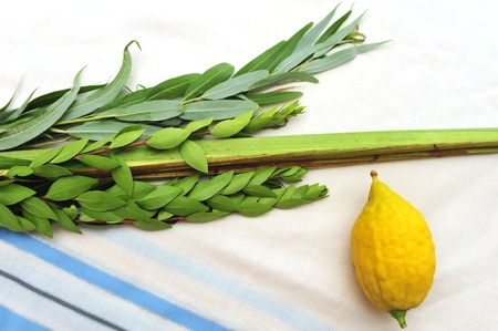 The Four Species - three types of branches and one type of fruit which are held together and waved in a special ceremony during the Jewish holiday of Sukkot. The waving of the Four Species is a mitzvah prescribed by the Torah, and contains symbolic allusi