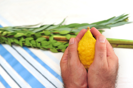 succos: The Four Species  three types of branches and one type of fruit which are held together and waved in a special ceremony during the Jewish holiday of Sukkot Stock Photo