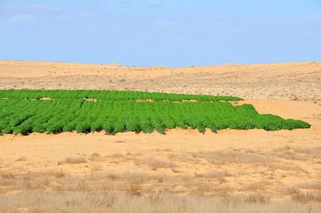 israel farming: Desert farming in the Negev, Israel. Stock Photo