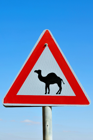 camel post: Camel road sign warning drivers to beware of camels crossing the road Stock Photo