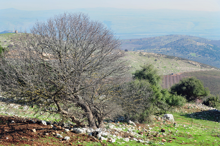 Galilee landscape, Israel. Stock Photo