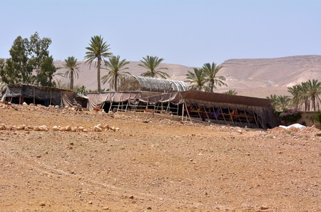 bedouin: Bedouin tent in oasis in the Judean Desert Israel Stock Photo