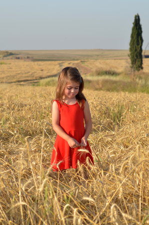 jewish holiday: Israeli Jewish girl collects wheat from the field for Shavuot Jewish Holiday