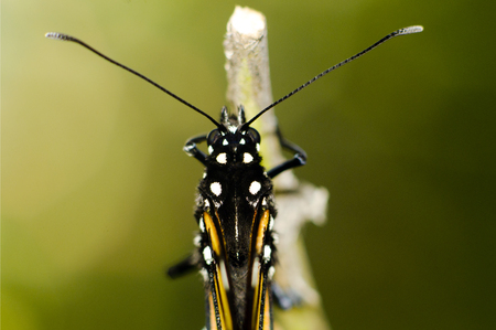 transfigure: Monarch Butterfly Milkweed Mania.