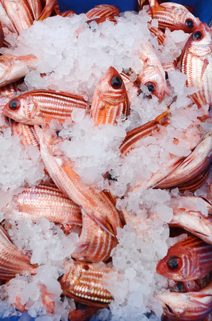 middle eastern food: Frozen fish on display in Middle eastern food market in Akko Acre Israel. Stock Photo