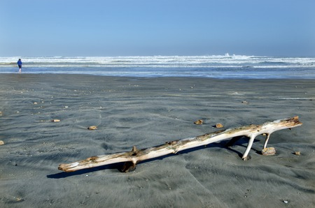 rote: A man and an  old tree log that washed on Ninety Mile Beach, Northland New Zealand. Stock Photo