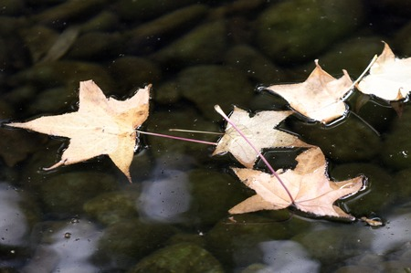 Autumn Leaves and Fall Colors in water. photo