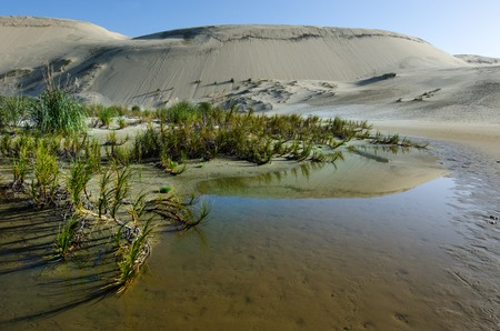 quicksand: Reflection in water of Te Paki Sand Dunes in Northland New Zealand.