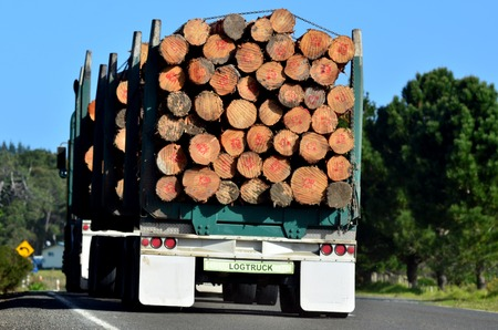 Logging truck during transportation in Northland New Zealand.